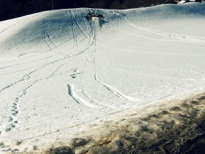 Paths in the snow